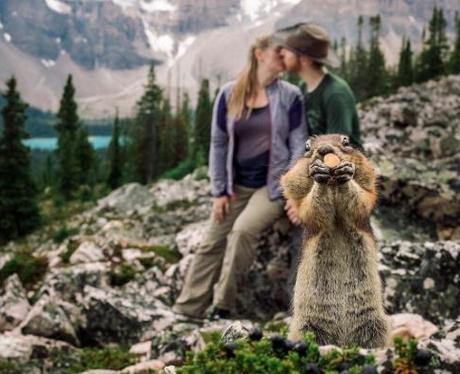 Romantic shoot photobombed by squirrel