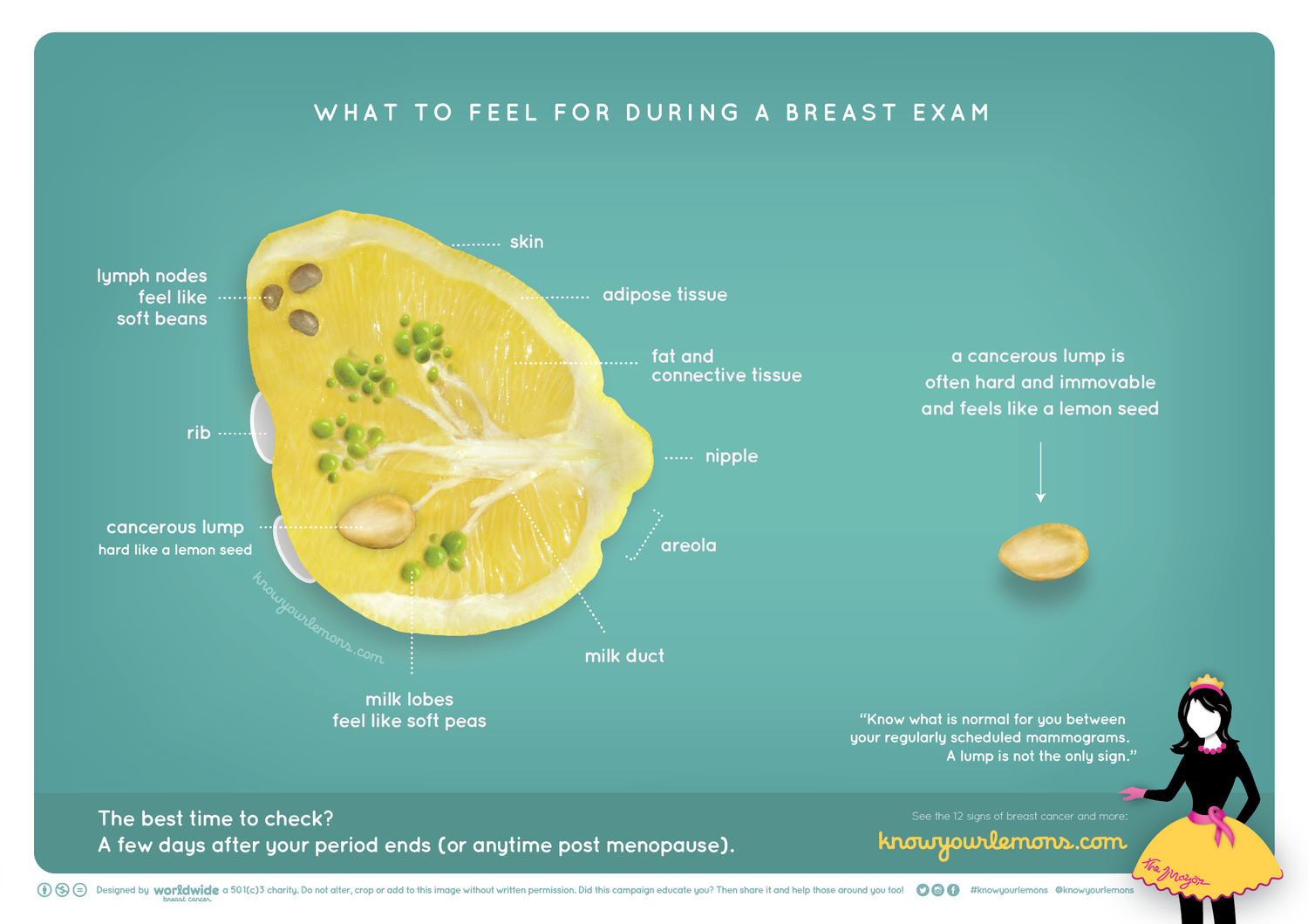 Illustration of breast using lemon