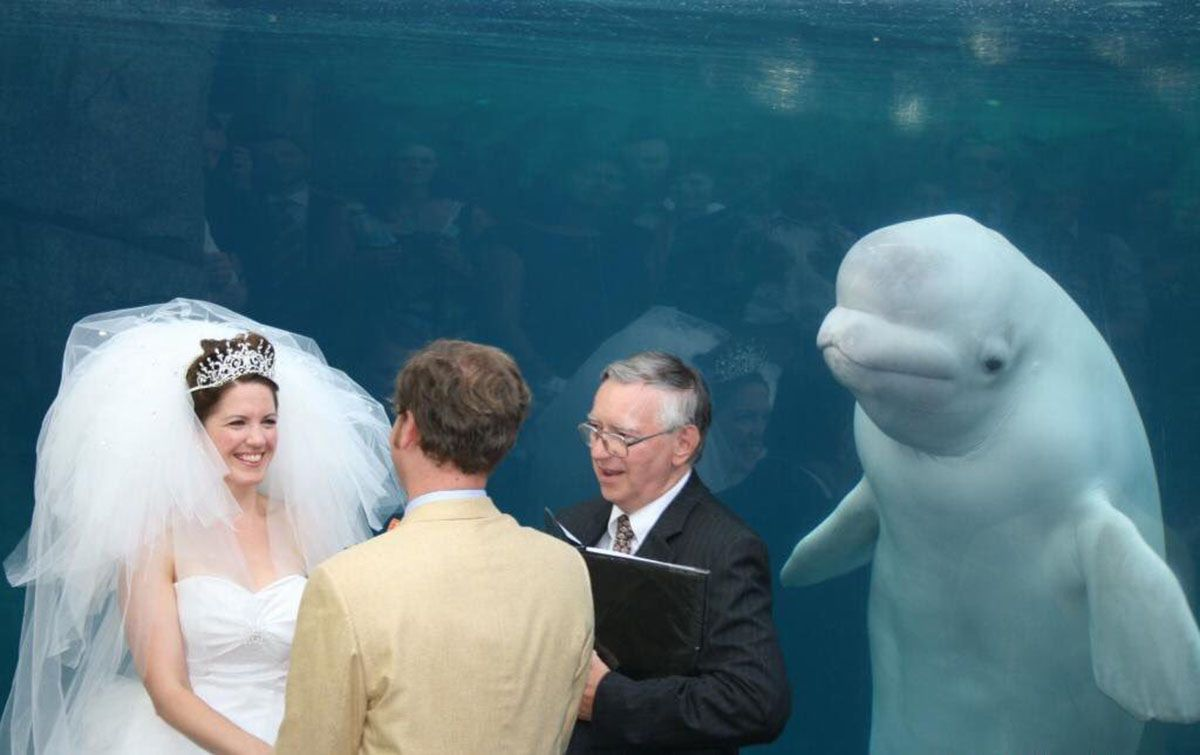 Whale gate crashes couple's wedding
