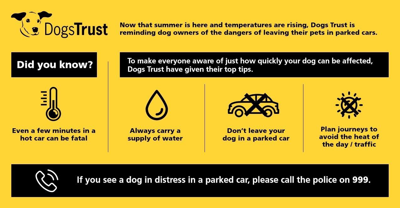 Car advice