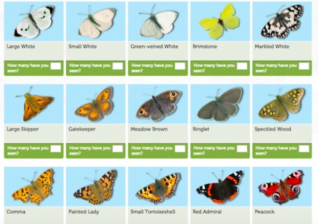 David Attenborough Great Butterfly Count