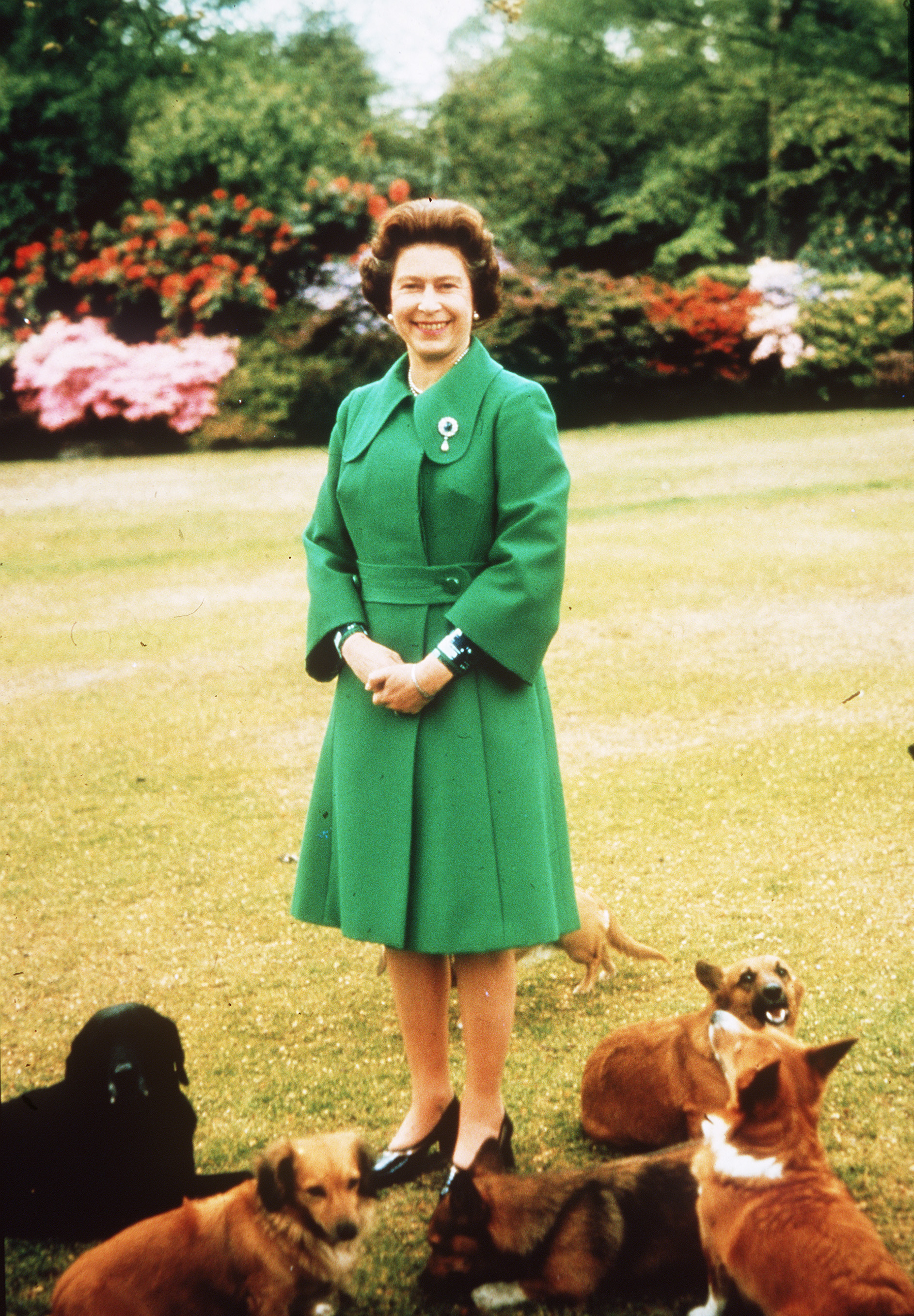 Queen and corgis