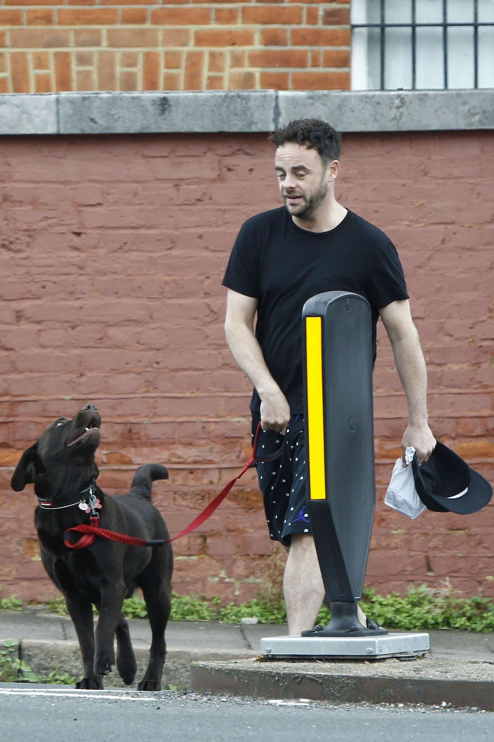 Ant McPartlin walking his dog