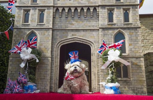 mirfield windsor castle dog