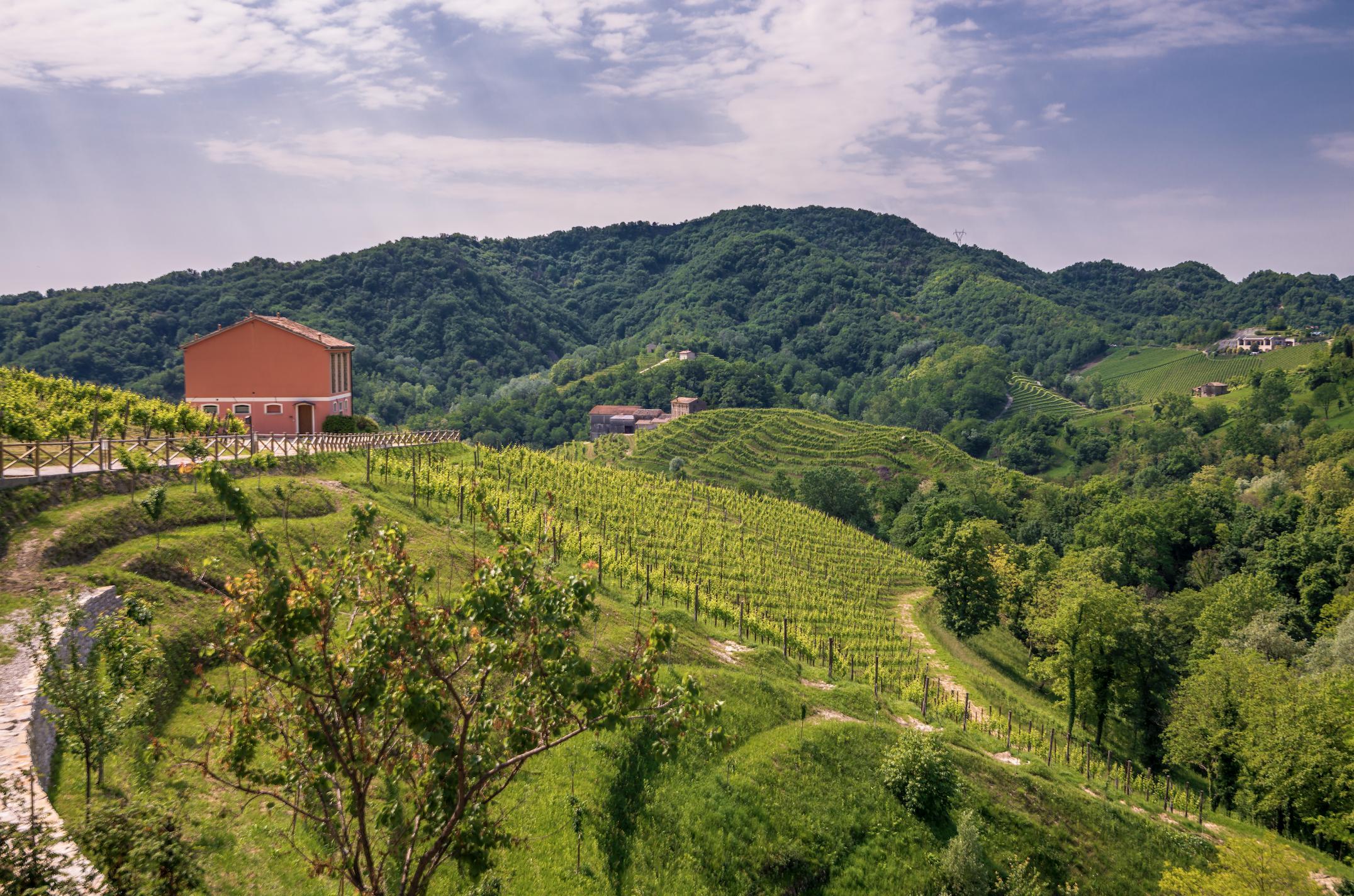 Prosecco vineyards