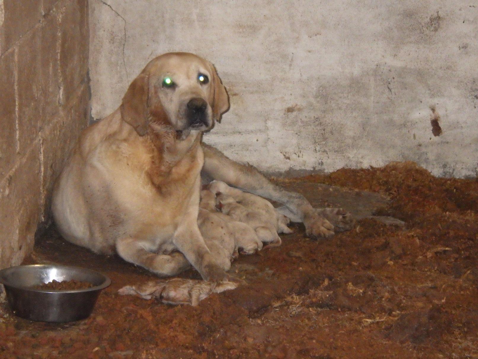 Illegal puppy breeder