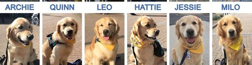 Some of the dogs who took part in the trial
