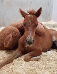 Foal not out of the woods yet
