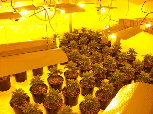 Cannabis factory Horfield Bristol