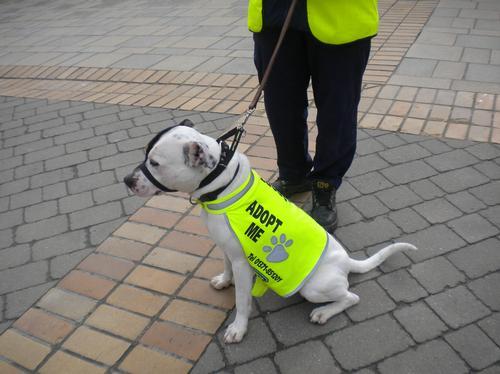 Rescue Dog models new jacket