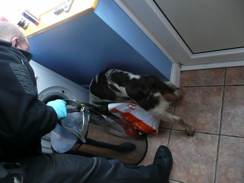 Sniffer dog checks property