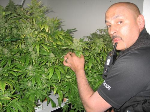 Cannabis plants found in a house in Sheerness