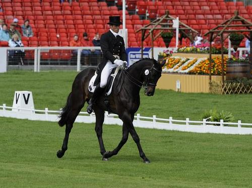 Paul Tapner on Stormhill Michael in the Dressage