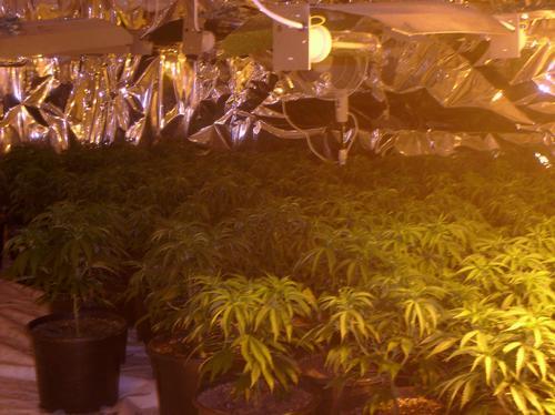 Clifton Cannabis Factory