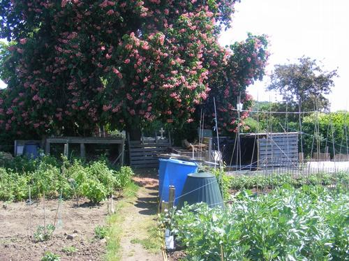 Allotment in Sandy