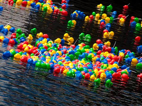 Norwich Duck Race