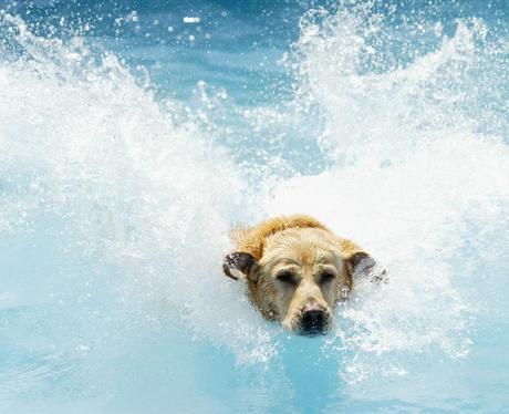 National Dog Day uk
