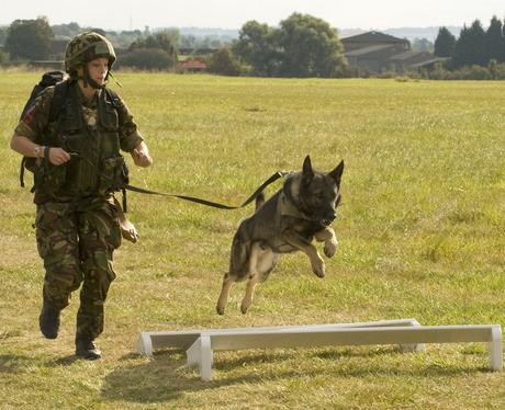 RAF Dog Trials