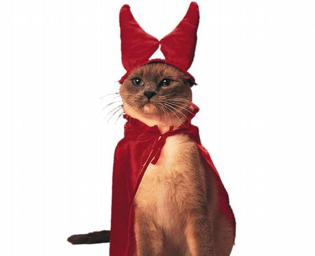 A cat in a red cape and horns