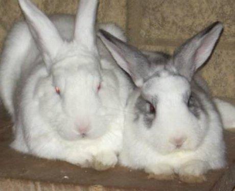 Alfie & Angelica