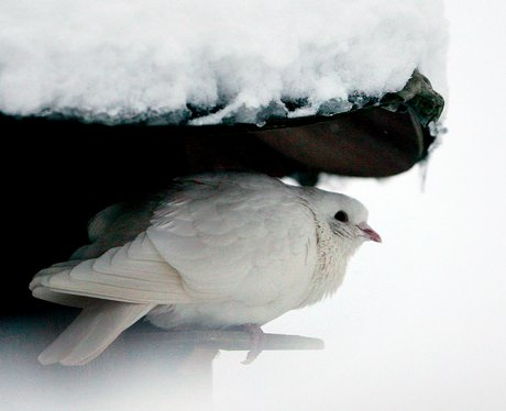 Snow Kent