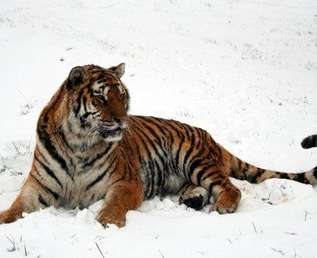 Woburn Snow