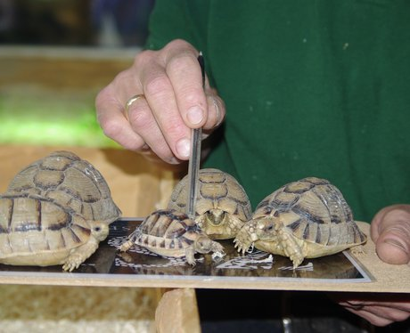 Stocktake at Whipsnade Zoo