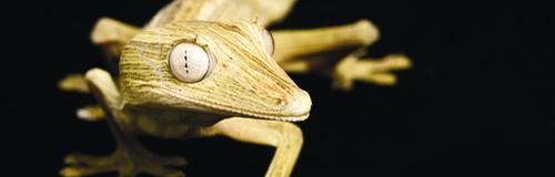Marwell Gecko