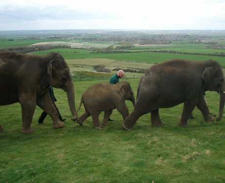 Whipsnade Elephants