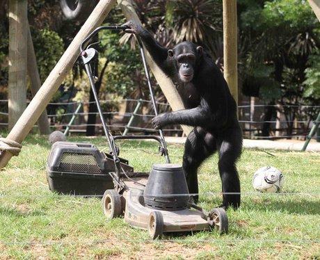 monkeys gardening