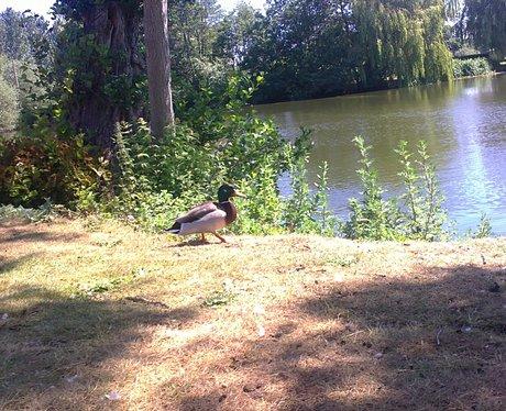 A duck - but still no alligators....