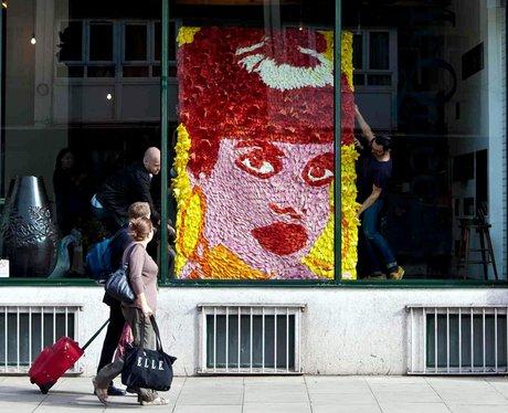 lily allen florists portrait
