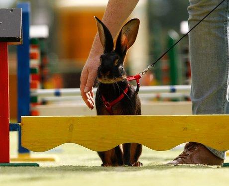 Rabbit Hopping