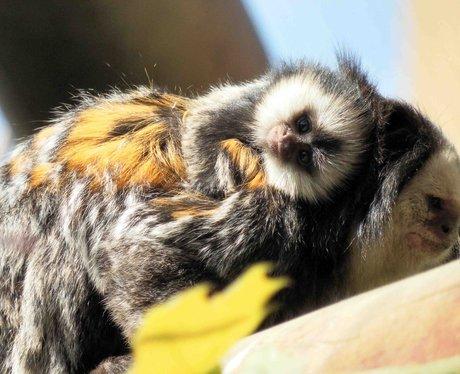 Picture: Colchester Zoo