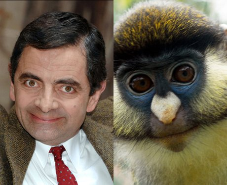 Celebrity Animal Lookalikes