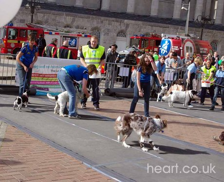 RSPCA's Leaps and Bounds Appeal