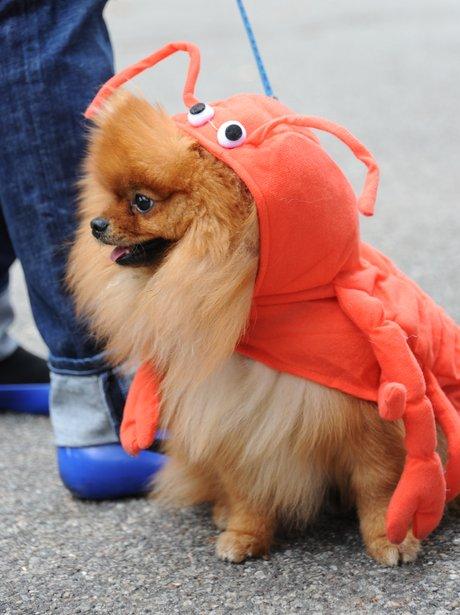 pets in fancy dress