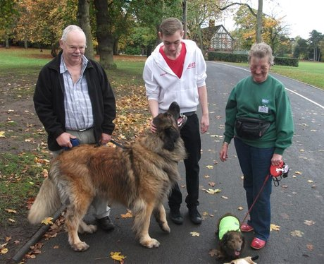 Doggy Marathon