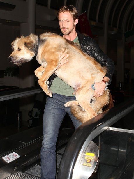 Ryan Gosling with his dog
