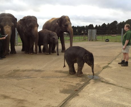 Whipsnade Zoo