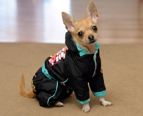 Best Dressed Dog Rocky