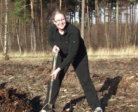 Swinley Forest replant