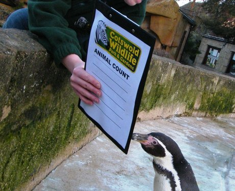Animal Counting at the Cotswold Wildlife Park