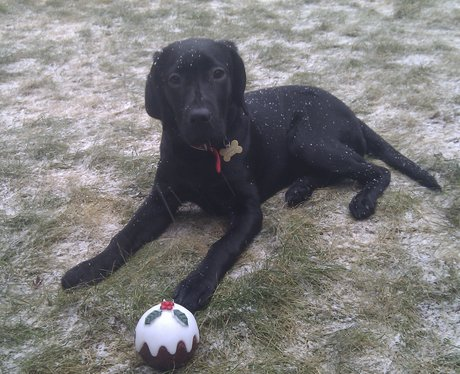 Snow Radley