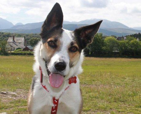 Daleside Pet Pics Competition