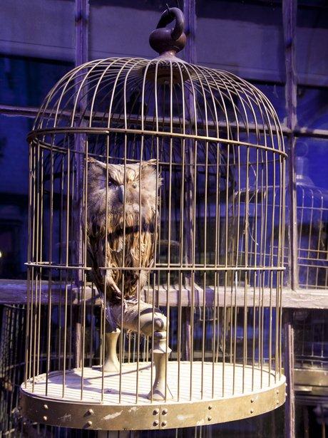 Harry Potter tour owl