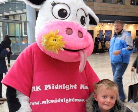 Midnight Moo Launch
