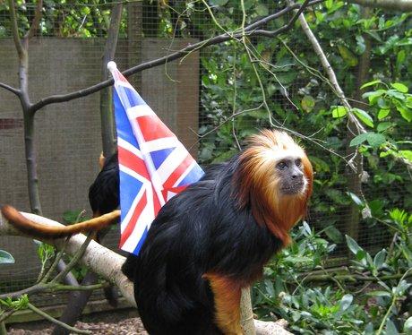 Banham Zoo 1