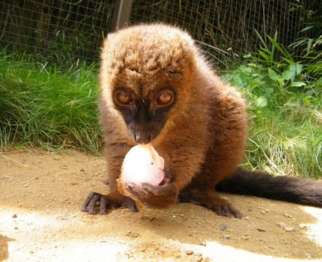 Animals at Cotswold Wildlife Park enjoy ice lollie