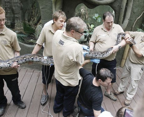 chester zoo snake health check